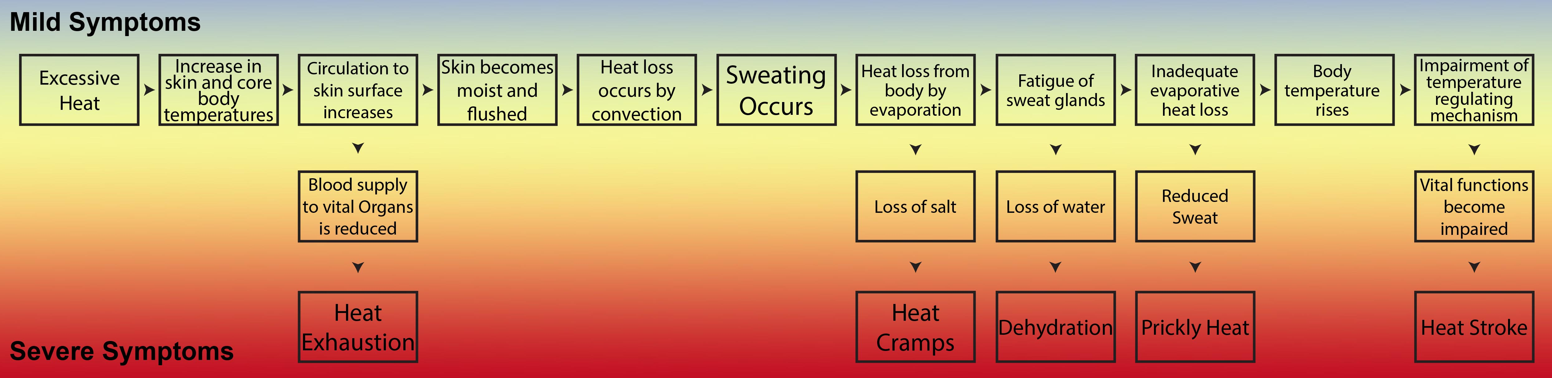 inforgraphic showing the quick progression of heat stress from dehydration to heat stroke